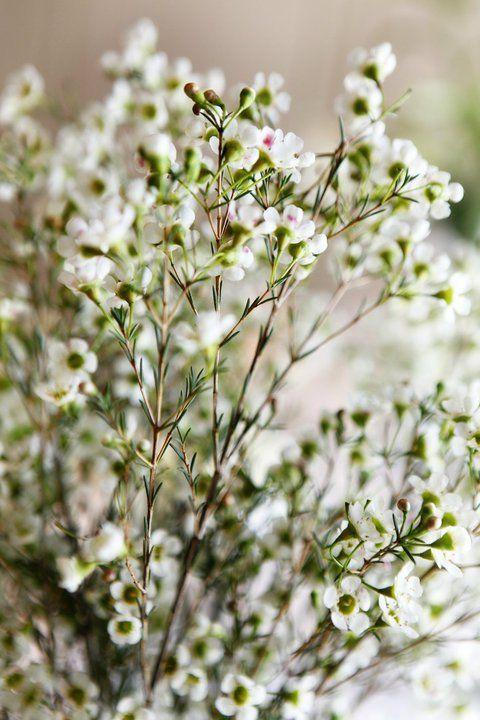 white flower crowns