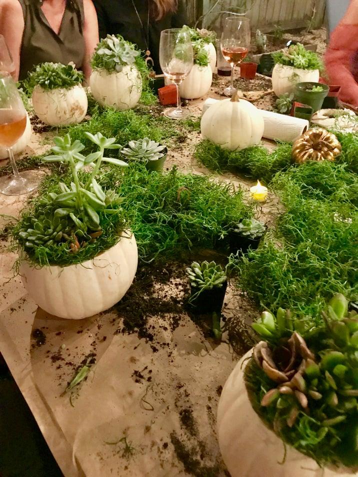 succulent filled pumpkins