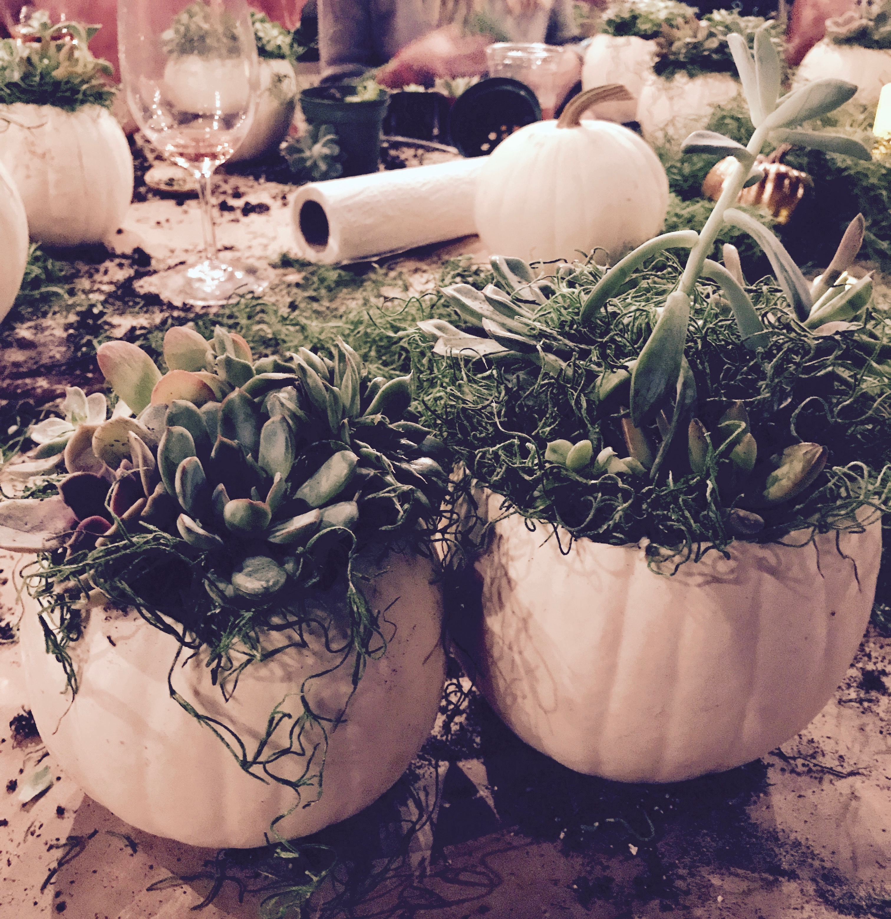 white pumpkins with succulents
