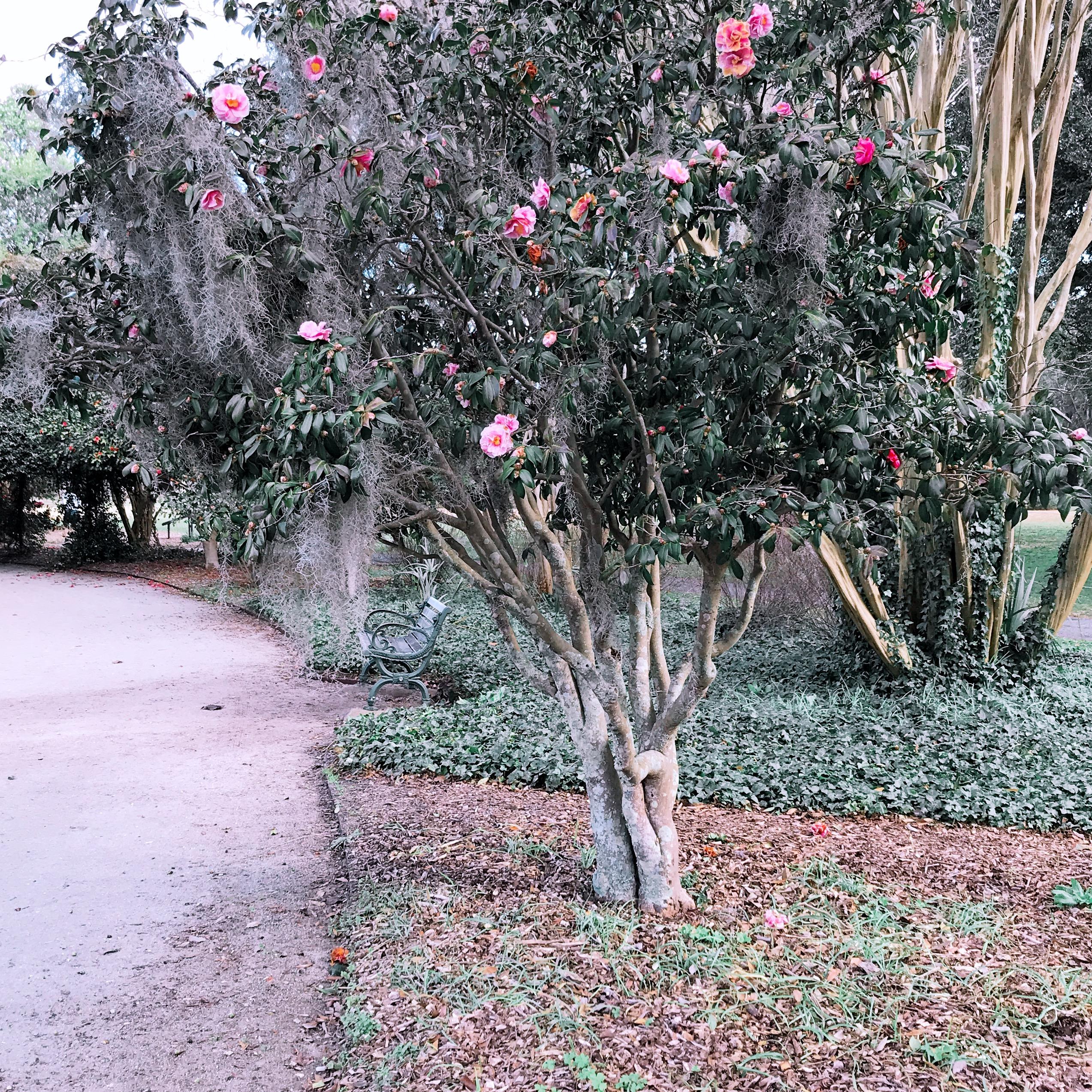 pretty flowers in Charleston, SC